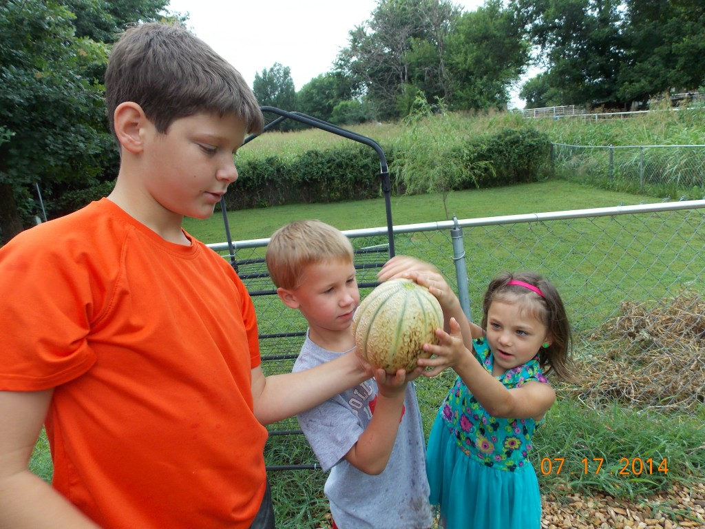 Kids carrying a canteloupe from the preschool garden to taste