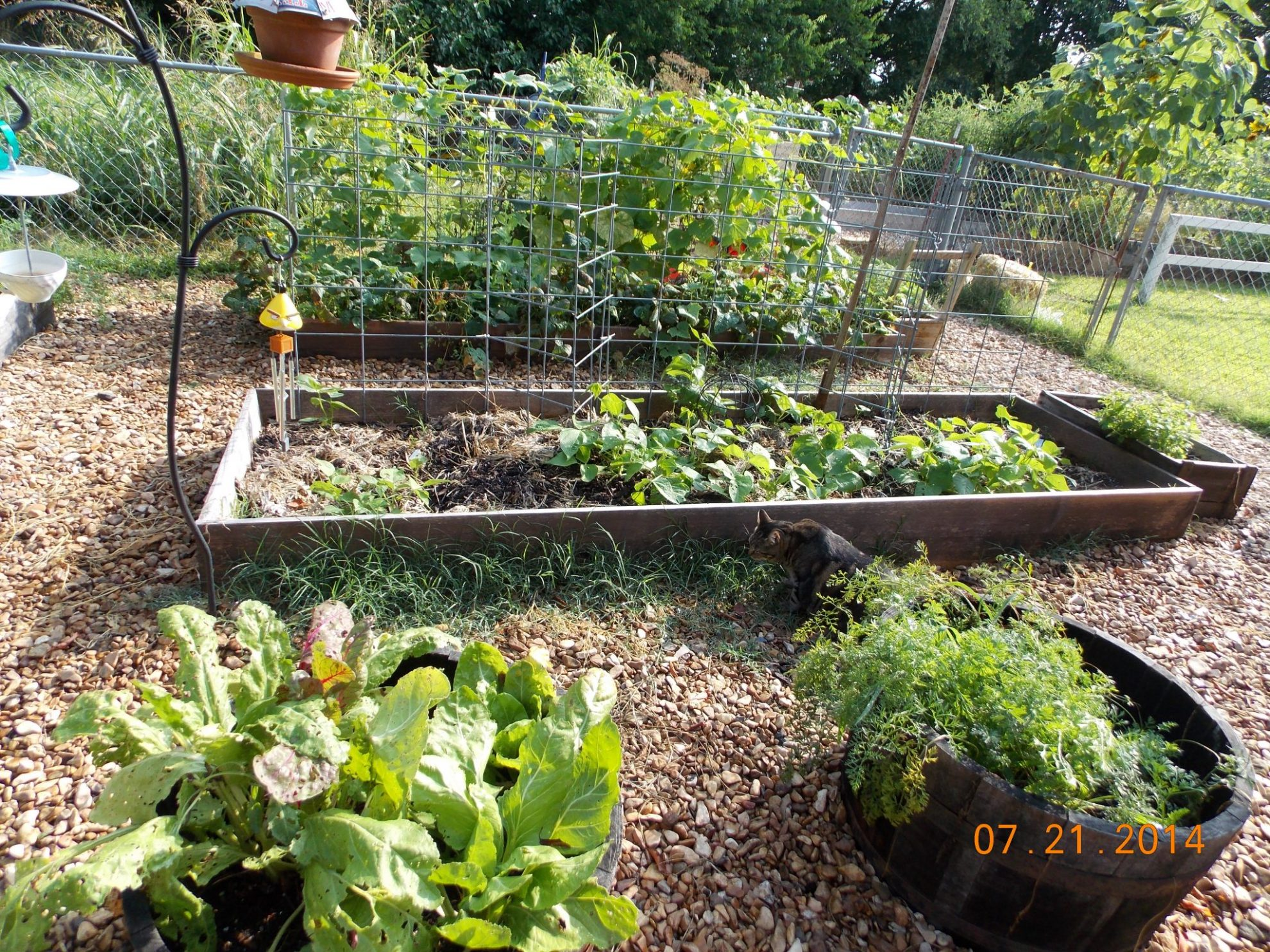 When the garden decides to put out cucumbers, it REALLY decides to put them out. You can end up with a ton of excess cucumbers and that can get overwhelming. Are you wondering what to do with excess cucumbers?