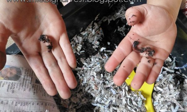 Worm composting for kids is easy and fun. Setting up a worm bin teaches your kids so much and is beneficial for the garden too.