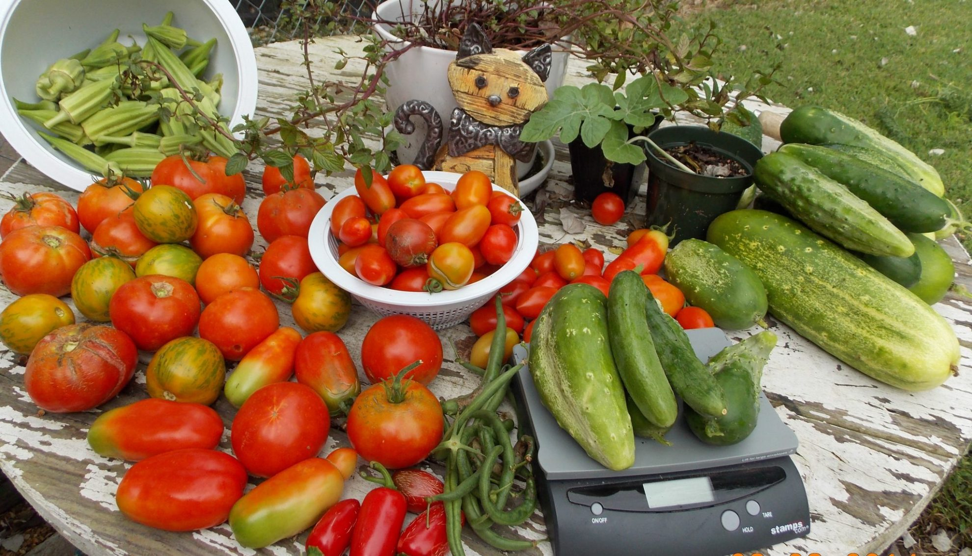 It's sometimes hard to tell when the produce is perfectly ready. Do you know when to harvest vegetables in the garden, and fruit?