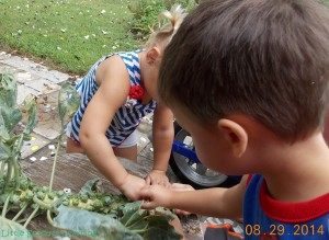 kids harvesting brussel sprouts