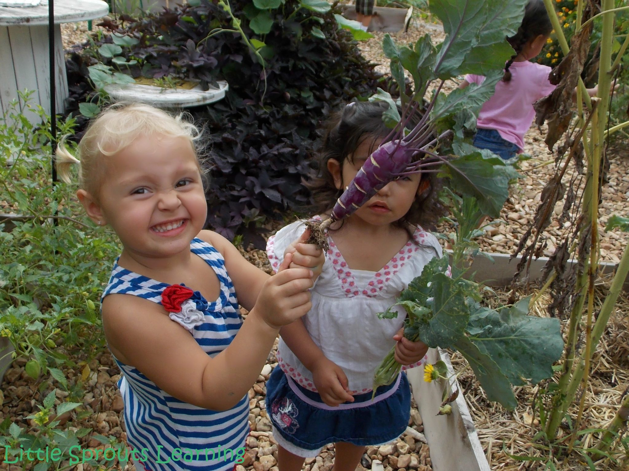 Some of the kids never tire of picking. Zealous for gardening. :)