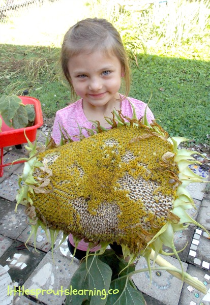 child holding a giant sunflower head