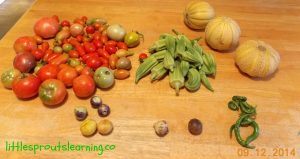 harvest gardening with kids