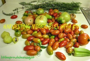 september harvest gardening with kids, hot peppers