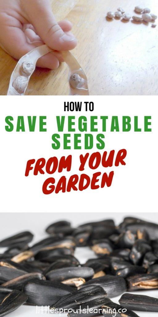 How to Save Vegetable Seeds From Your Garden