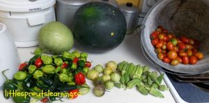 gardening harvest with kids