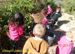 harvest day with kids