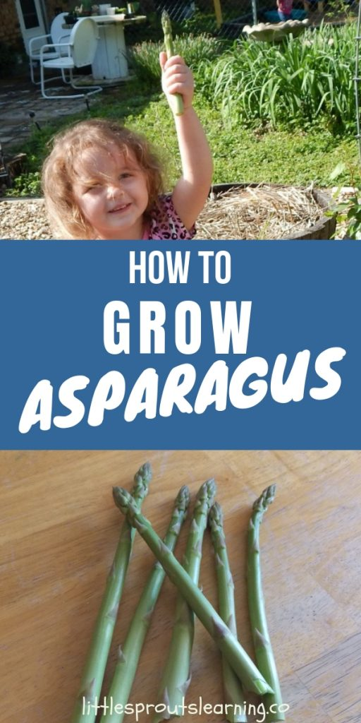 It's easy to grow asparagus. Make sure you plant it right side up and you'll be enjoying asparagus for years to come! It's not fussy.