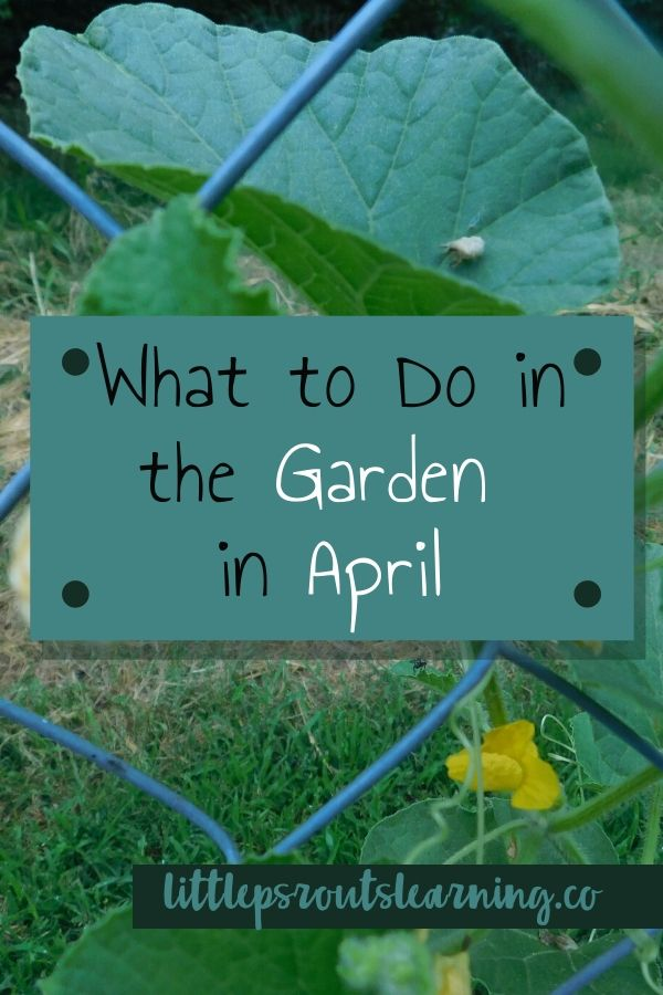 April is a busy and exciting month in the garden. We are in zone 7. Check out what to plant and what to prepare and plan in the garden in April.