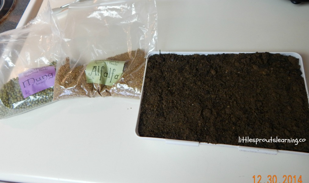 growing microgreens at home, soil tray with soil and two packets of microgreen seeds