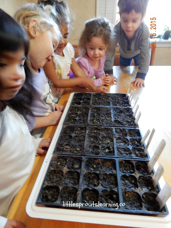 kids checking seedling progress, planting seeds with very young kids