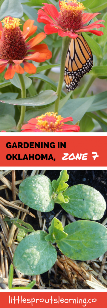 Gardening in oklahoma zone 7 little sprouts learning for Gardening zones colorado