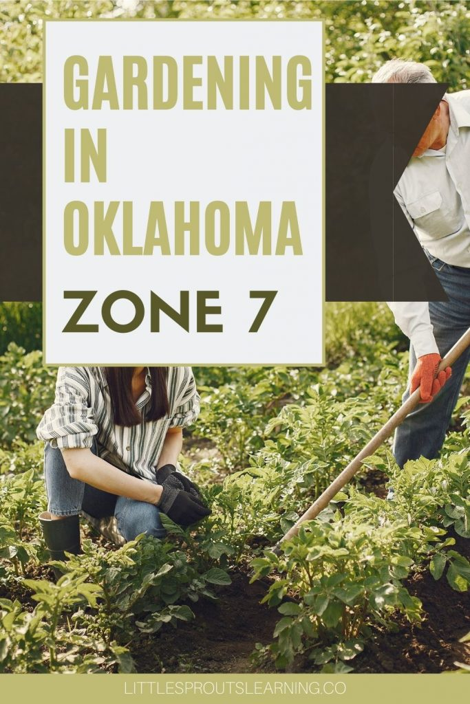 One of the best things about gardening in Oklahoma zone 7 is the long growing season and plentiful sunshine. Heat-loving plants are key for success.