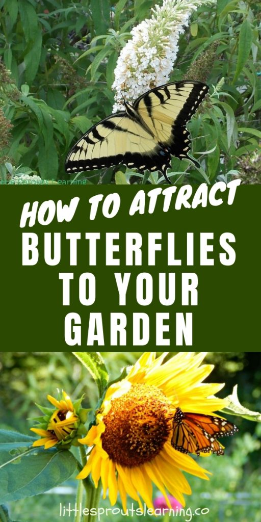 Butterflies are good for more than just beauty, they are one of the best pollinators for your garden. Check out how to attract butterflies to your garden.