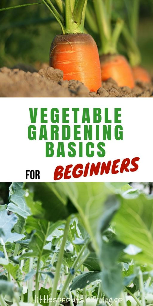 Vegetable gardening basics for beginners