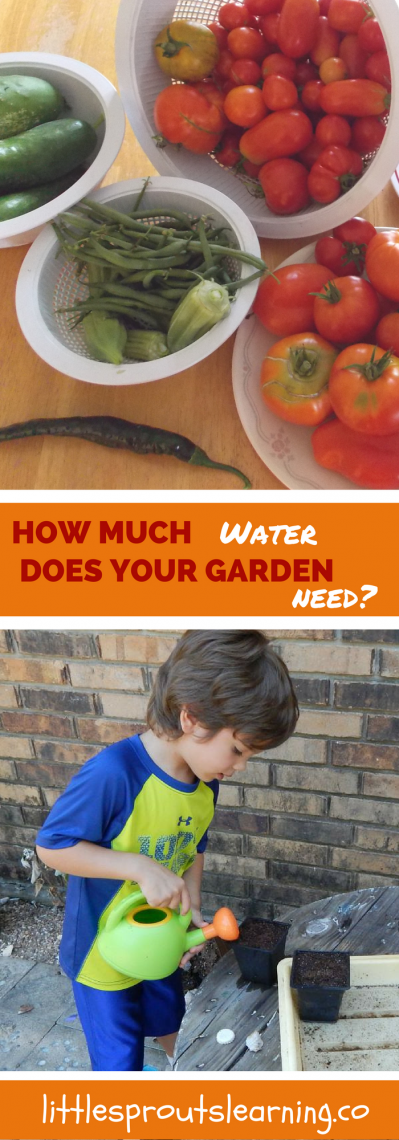 how much water does your garden need little sprouts learning