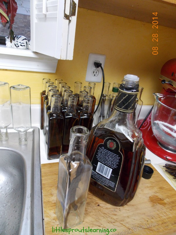 steeping vanilla beans in alcohol to make homemade vanilla extract.