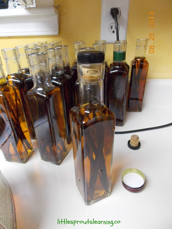 real vanilla getting ready to steep and turn into homemade vanilla extract