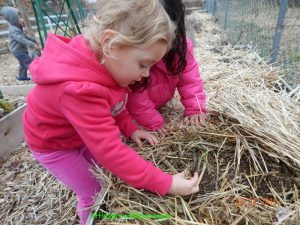 kids planting onions