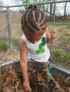 kids planting potatoes