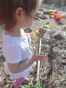 planting seedlings with kids