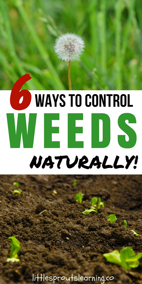 6 ways to control weeds naturally!