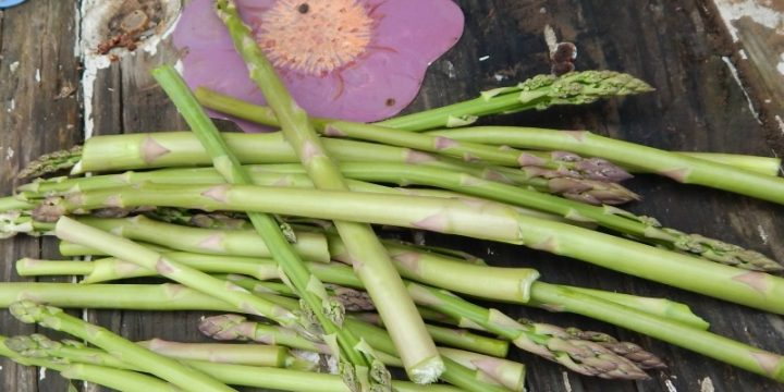 It's easy to grow asparagus. It doesn't take a lot of fuss. Make sure you plant it right side up and you'll be enjoying asparagus for years to come!