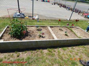 3 year old garden
