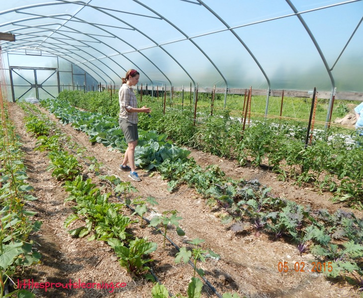 farm tour, cassie, inside the hoop house with rows of veggies growing