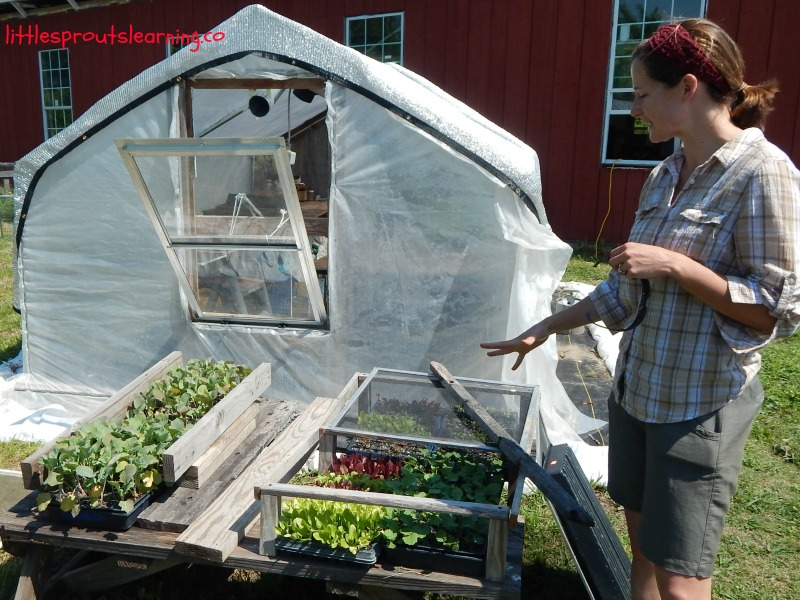 greenhouse childcare garden tour, cassie from peace of prairie farm showing her cold frames with seedlings.