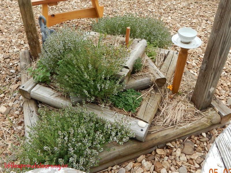 bed of herbs in the preschool sensory garden