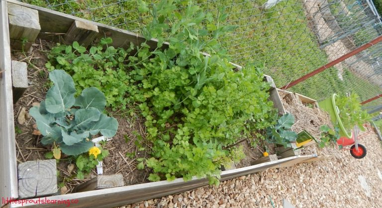 10 Benefits of Raised Garden Beds