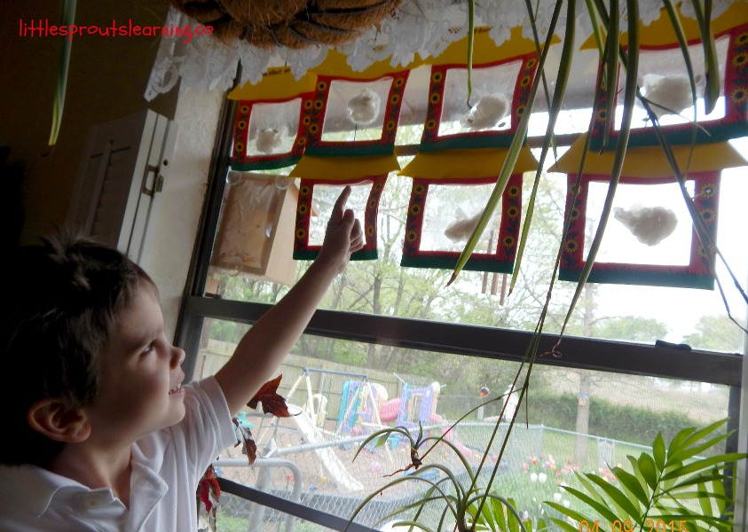 seeds germinating in the window and a child observing them