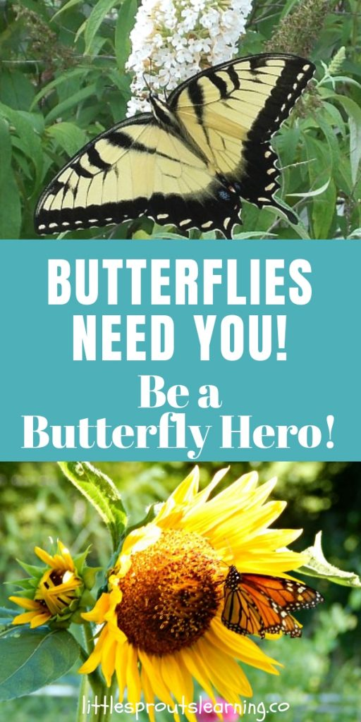 Butterflies, bees, flies…pollinators! Without pollinators, our food doesn't grow. Did you know butterfly populations are on the decline? Butterflies need you. Be a butterfly hero.