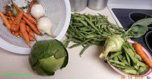 garden cabbage harvest