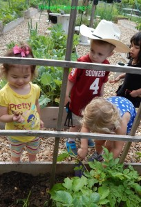 kids discovering potatoes in the garden