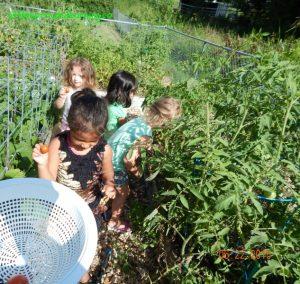 kids harvesting in the june garden