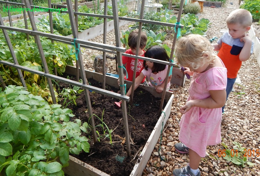 kids harvesting potatoes