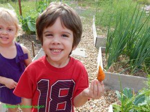 kids picking carrots