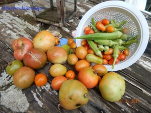 early august produce in the children's garden