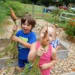 Learn to grow carrots successfully in your home garden and put those grocery store carrots to shame. The flavor and variety of kinds and colors of carrots will amaze.