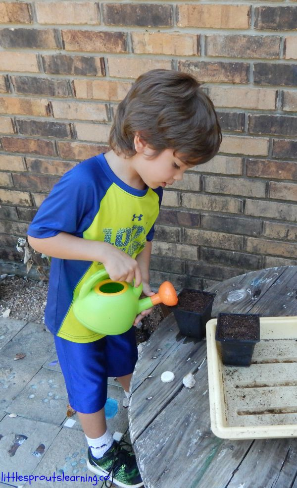 gardening with kids, watering seeds
