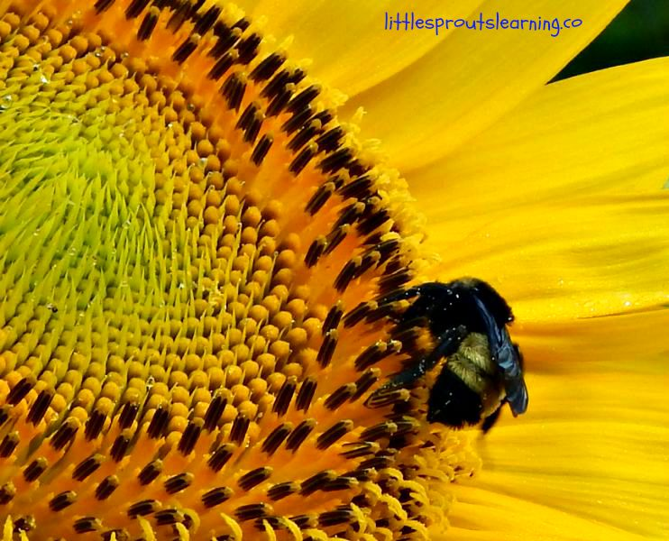 We need pollinators to survive. There are over 100 crops that could not produce without being pollinated by wildlife. Our pollinators are rapidly declining and we have to stand up and take notice. Without food, we will not survive. Make your garden a certified wildlife habitat today!