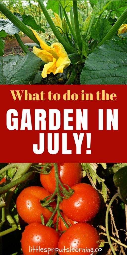 What to do in the Garden in July!