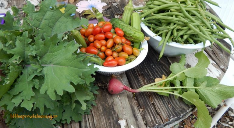 5 Steps to an Easy Vegetable Garden