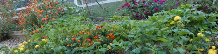 Preparing gardens for spring planting can be a lot less work than traditionally thought. There are many benefits to growing a no-till garden.