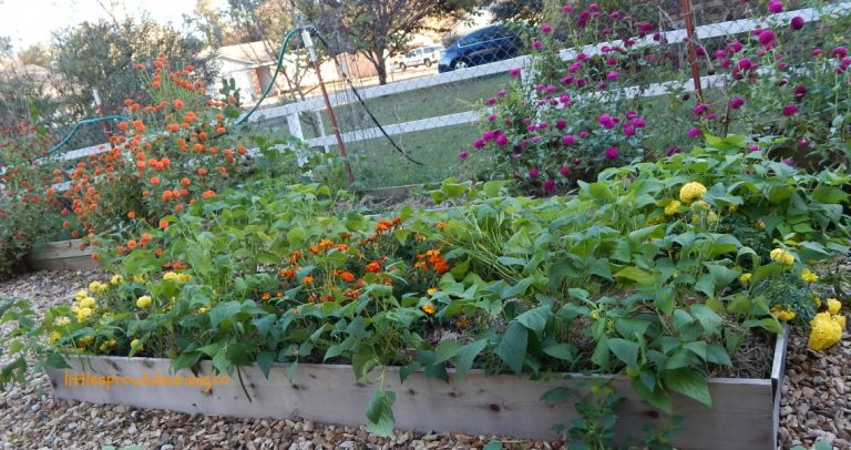 Preparing Gardens for Spring-Without Tilling
