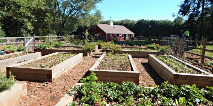Vegetable Garden Ideas Learning From Garden Tours