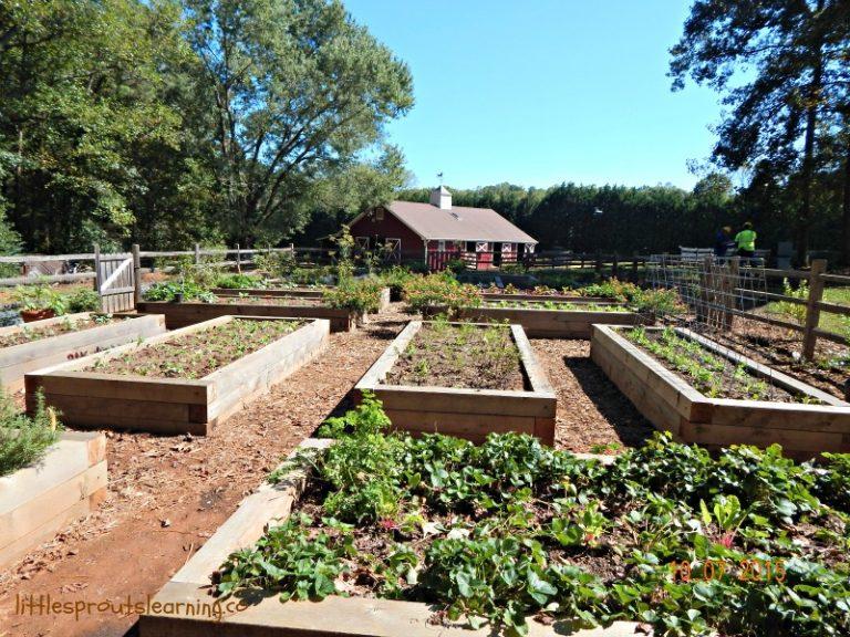 Vegetable Garden Ideas-Learning from Garden Tours